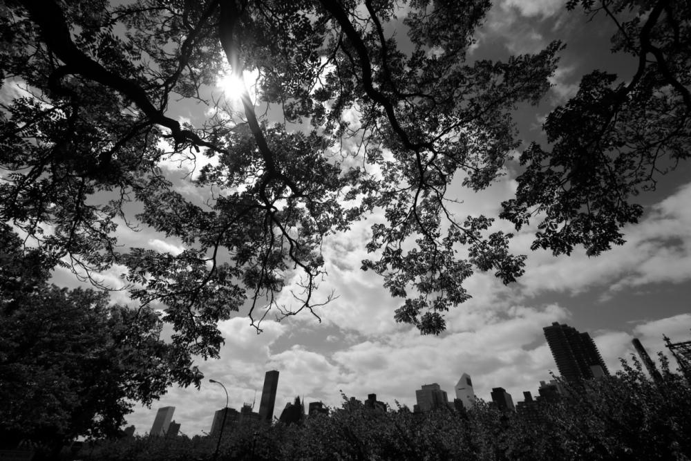 wide angle new york skyline photo