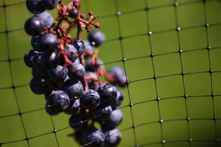 Vaperture 11/6/13: Wine. Zeiss 135mm f/2 MF: Long Island Wineries - 06