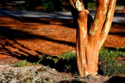 pine straw. Zeiss 100mm f/2 MF: Pinehurst Garden - 38. f/4, 1/1000. © Nicholas Vendemia | Vaperture. 12/26/13